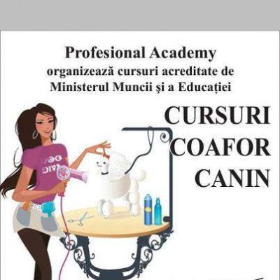 Curs Frizerie Canina Constanta