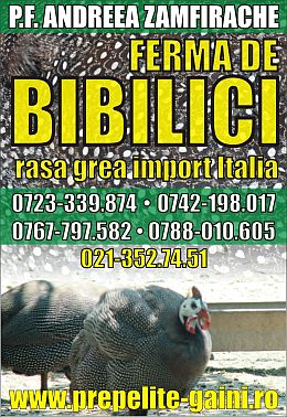 vindem bibilici import